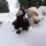 Sam and Andy, Catherine's Little Lambs, decided to borrow a dinner plate to go sliding in the snow.